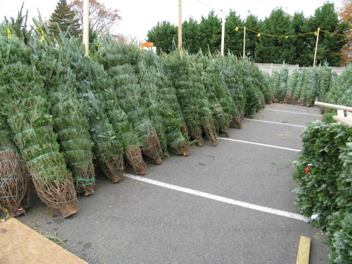 Christmas Trees Prepped For Sale In North Arlington ...