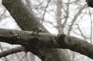 Snow falls near Columbia Pike