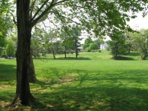 Generic park image (via Arlington County Parks Dept.)