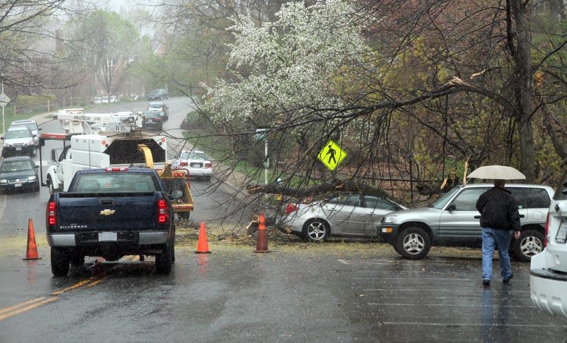 Falling Tree Crushes Car, Closes Road in Arlington Village | ARLnow.arlington village