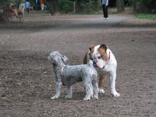 Dogs greeting each other at the Shirlington Dog Park
