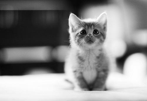 Kitten | ARLnow.com