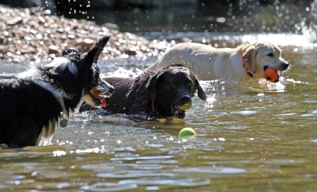 Dogs playing in the water at the Shirlington dog park