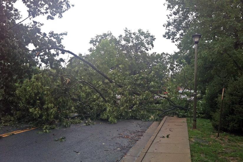Roads Blocked by Fallen Trees | ARLnow.com