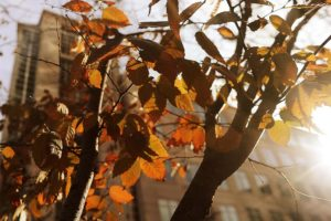 Leaves in the afternoon sunlight (photo by Maryva2)