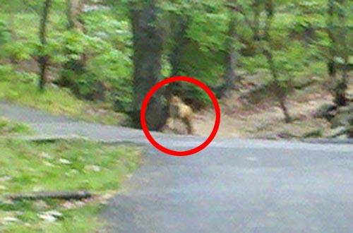 Coyote Spotted Near Lubber Run? | ARLnow.com