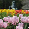 Tulips at the Netherlands Carillon