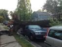 Tree on car on Madison Street near Nottingham