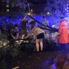 Police and residents help remove a tree from George Mason Drive