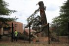 The historic George Washington Tree was severely damaged in the June 29 derecho storm