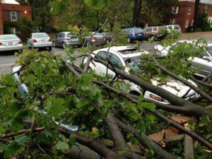Storm damage in Arlington Village (photo courtesy @cmags44)