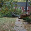 Tree down in Arlington Oaks (courtesy @MsCole84)
