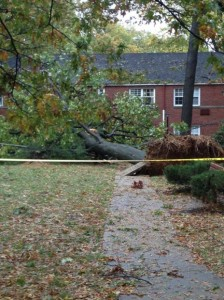 Tree down in Arlington Oaks (courtesy @MsCole84)
