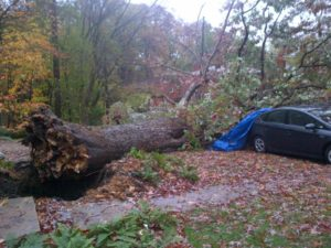 "Trees down on wires and cars, blocking the roadway, at S. Harrison Street and 5th Street S. (courtesy ""a Glencarlyn resident"")"