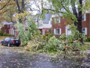 Branches down at Ives and 23rd Street S. in Aurora Hills (photo courtesy Fred Dunn)