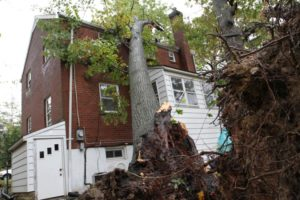Two trees fell in the backyard of a home in Arlington Forest. One fell on the home itself.