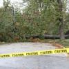 A tree down across a road in Lyon Park