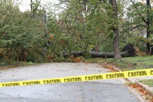 A tree down across a road in Lyon Park