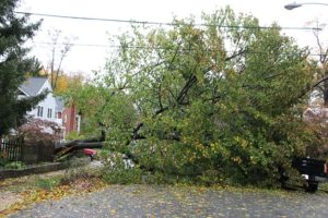 Tree takes down lines on N. Vermont Street in Waverly Hills