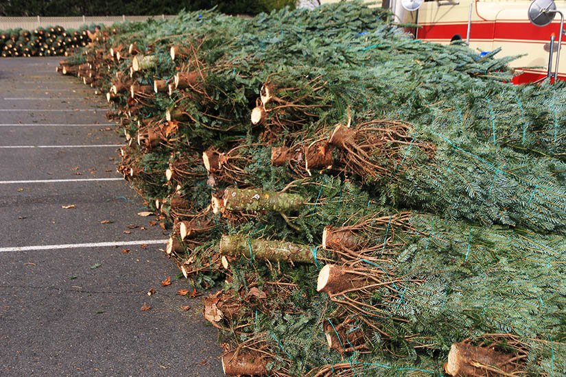 arlington optimist club christmas tree sale - Christmas Tree For Sale