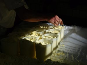 Jersey Blue cheese being made (photo by Katie Carter)