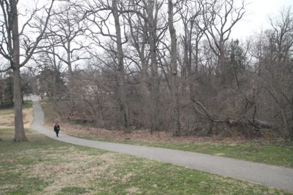 Part of the Arlington Woods, which will be preserved
