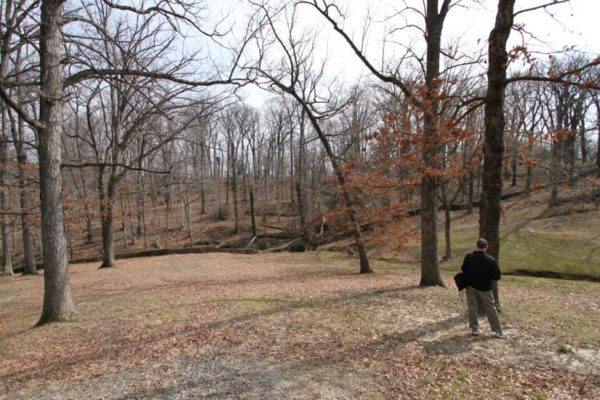 Most of these trees are set to be removed for the expansion of Arlington National Cemetery
