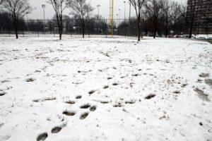 Spring snowfall in Arlington 3/25/13