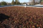 2617 Green Roof (1)_825x549