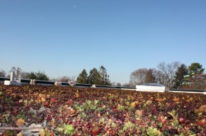 2617 Green Roof (4)_825x549