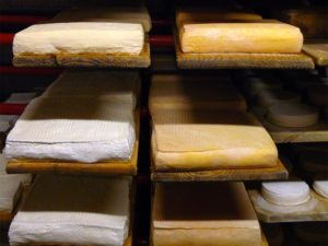 Cheesemaking (photo by Katie  Carter)