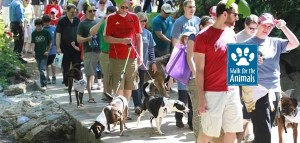 Walk-for-the-Animals-Image