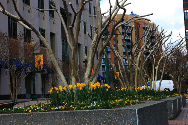 Bare trees in Ballston