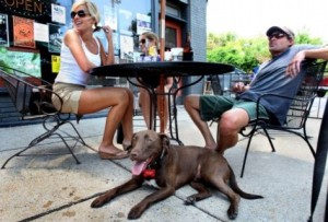 Dog at a sidewalk cafe (photo via Arlington County)