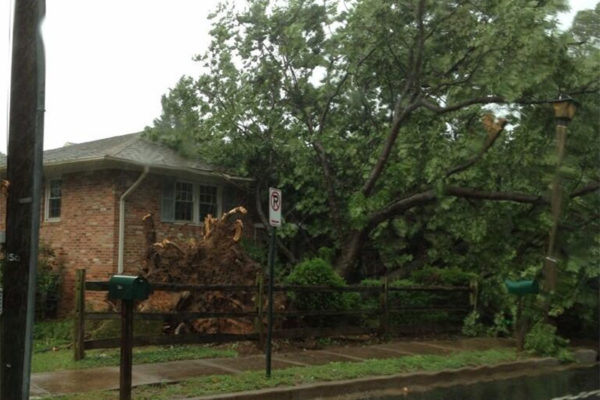 Tree down in front of a house on Old Glebe Road (photo courtesy @Sir_Rock13oy)