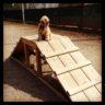 Truman - Dog Park_619x619