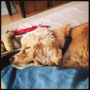 Truman - Napping_619x619