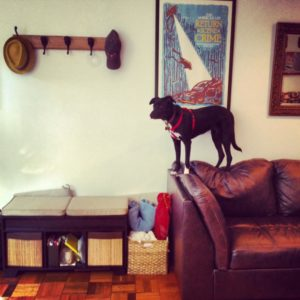Penny Gaurd Dog_619x619