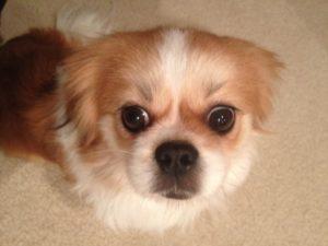Pet of the Week: Sybie