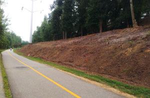Restoration along W&OD trail