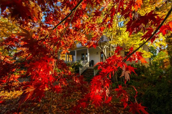 Fall foliage outside a house in Arlington (Flickr pool photo by Wolfkann)