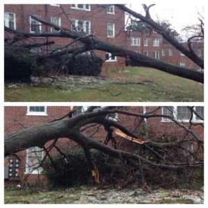 Tree down in Colonial Village (photo courtesy @DanaCJensen)