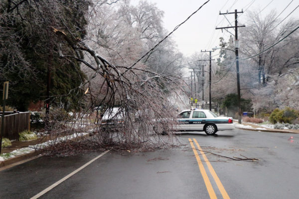 Downed tree on Washington Blvd and N. Dinwiddie Street