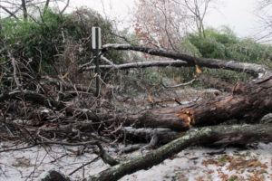 Tree falls at Glebe Elementary School (photo courtesy Camryn Gulbranson)