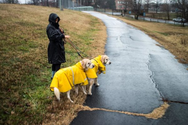 Soggy dogs near the Foreign Service Training Center (Flickr pool photo by Ddimick)