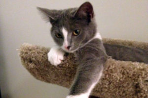 AWLA cat (photo via Facebook)