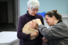 Arrow, the cat that had been shot with BBs, gets adopted