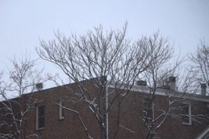 Snow in Rosslyn on 3/25/14