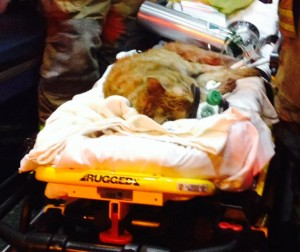 A cat was rescued from a townhouse fire Wednesday morning (Photo courtesy ACFD)