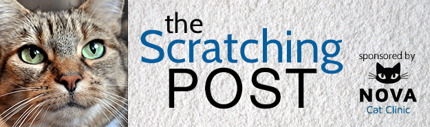 The Scratching Post banner